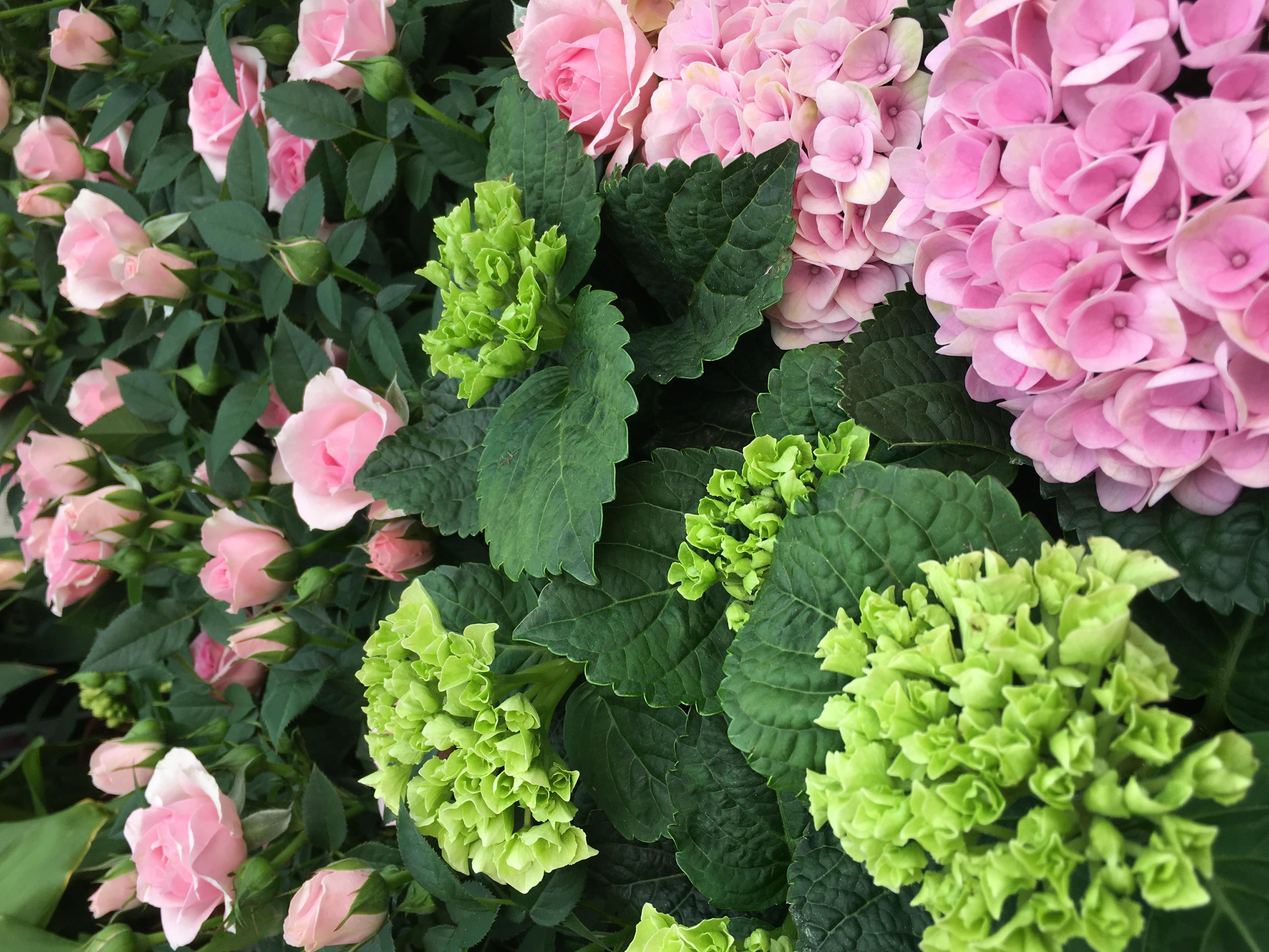 Bekend Bloemen en planten in onze bloemenwinkel te Olen GK-91