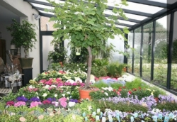 't Festoentje te Olen (Antwerpen) is een bloemenwinkel met een passie voor bloemen en planten.