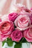 In onze bloemenwinkel zal je altijd minstens 60 verschillende soorten snijbloemen vinden van de beste kwaliteit.
